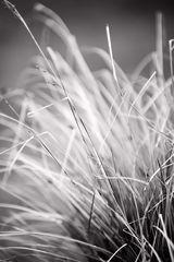 Gräser im Grau der Zeit..