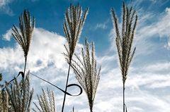 Gräser im Herbstwind