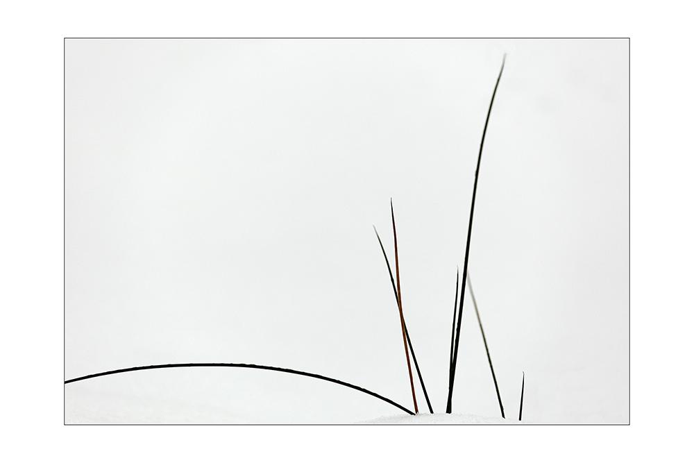 Gräser im Schnee