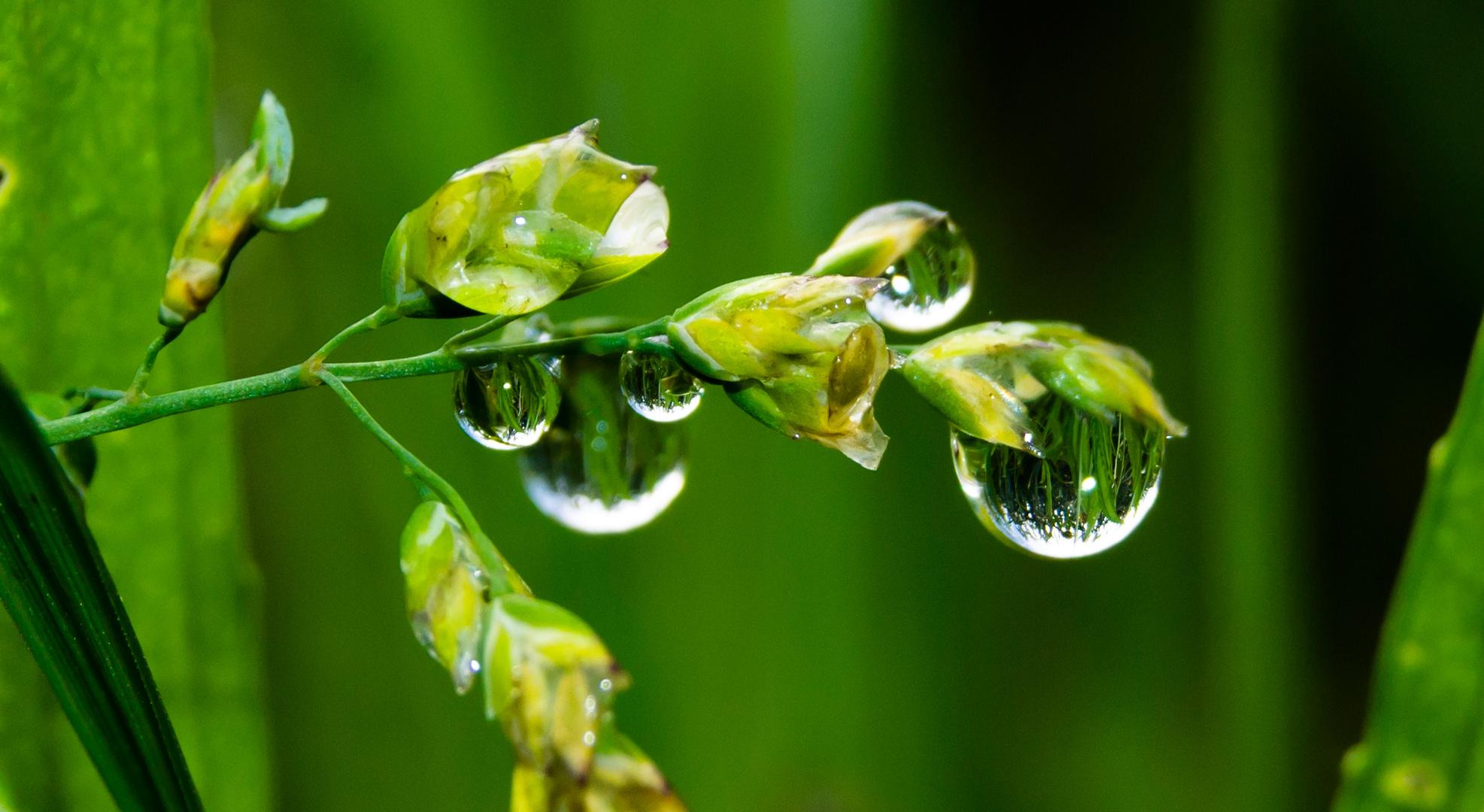 Gräser im Spiegel der Natur