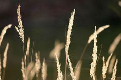 Gräser in der Sonne
