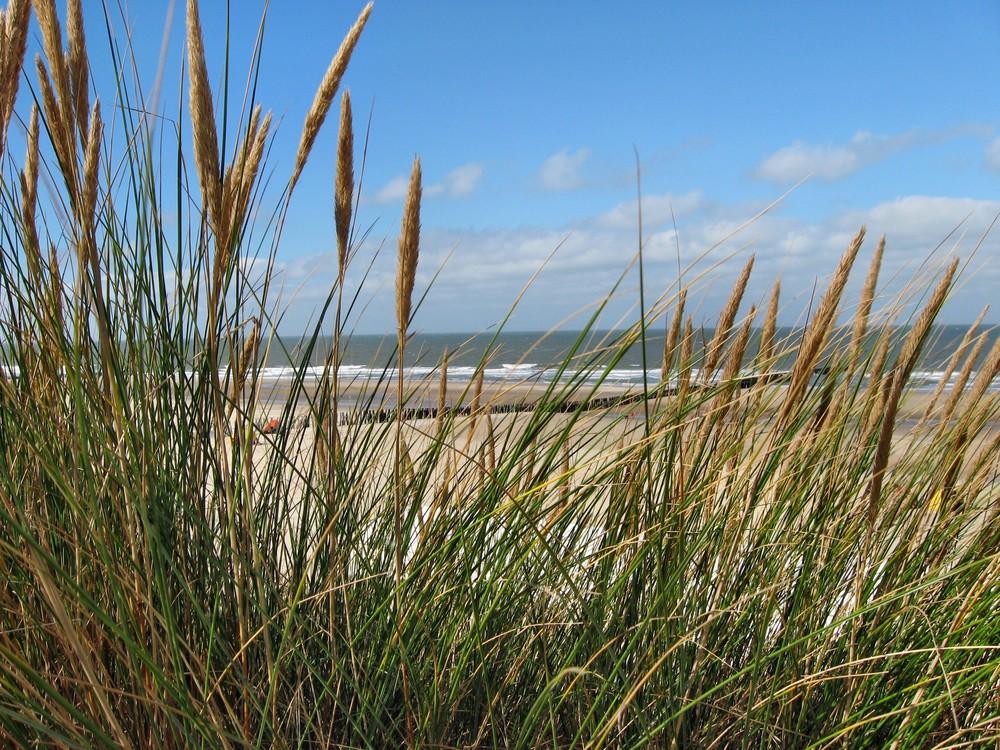 Gräser und Meer 1
