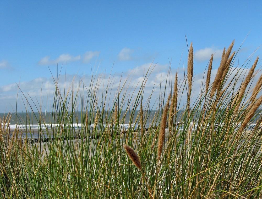 Gräser und Meer 2