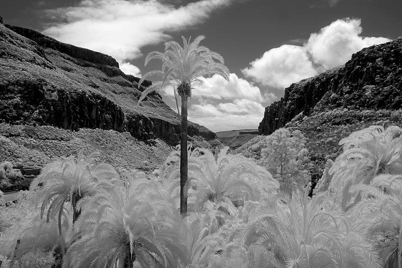 Gran Canaria Landschaft in Infrarot