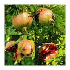Granatäpfel....