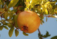 Granatapfel... # Granada...