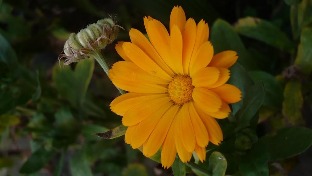 Grand MoM Flower