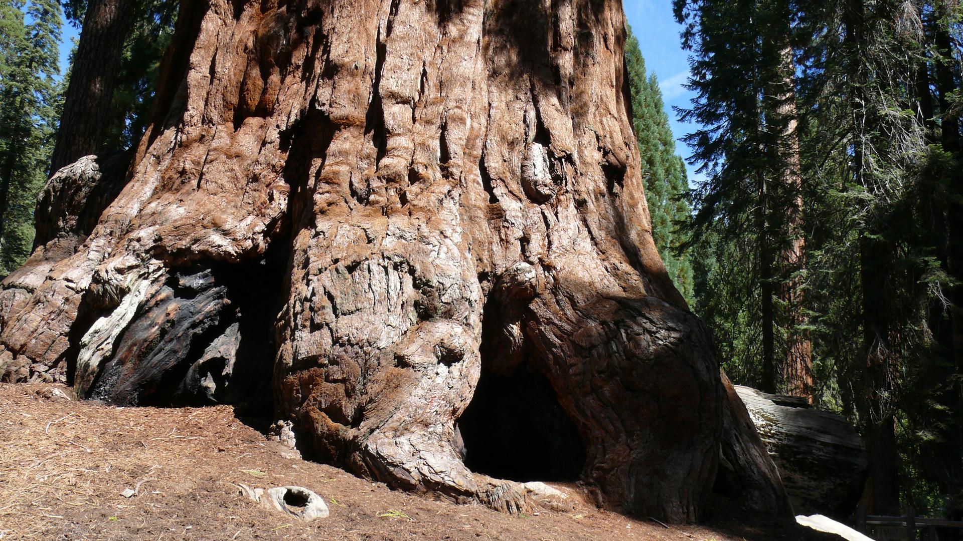 Grand Tree Trail