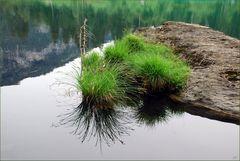 Gras am See