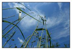 Gras aus der Sicht einer Ameise