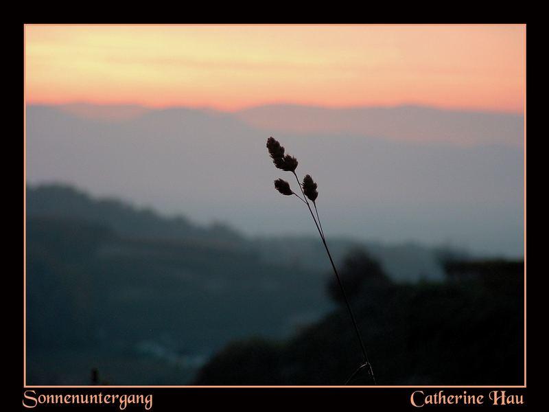 Gras im Zwielicht bei Sonnuntergang