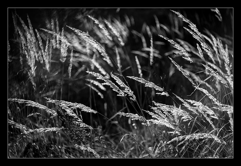 Gras-Meer