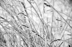 Gras nach kalter Nacht