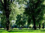 ... grasen unter Bäumen ...