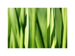 gras.grün