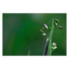 [gras.grün.lila]