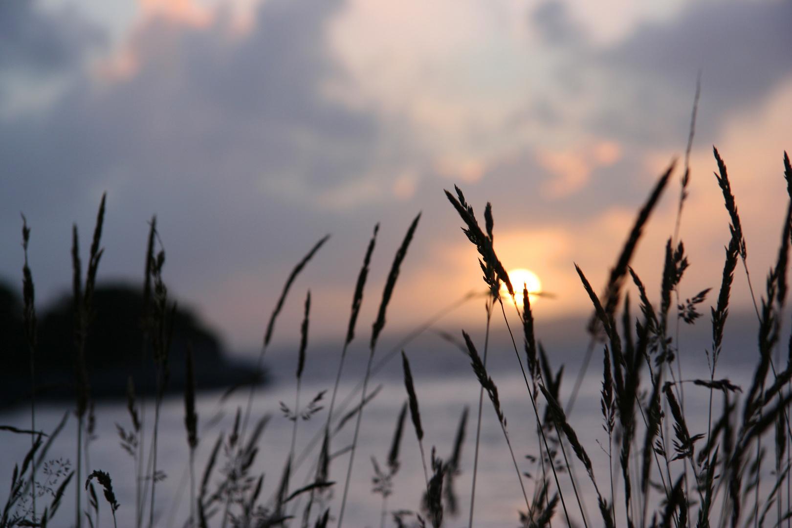 Grashalme an Meeresküste vor Sonnenuntergang
