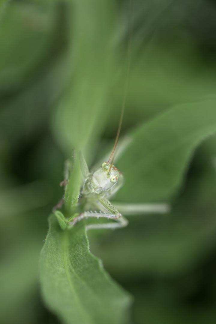 Www.Grashopper.De