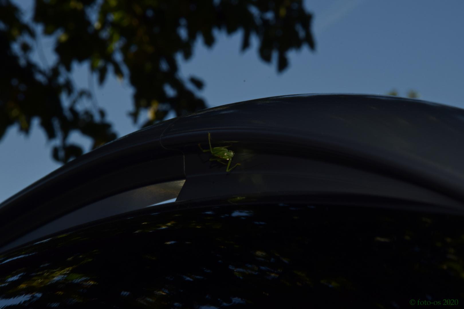 Grashüpfer auf schwarzem Auto