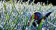 Graslandschaft am Morgen