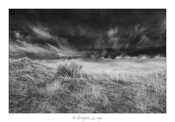 Grass and Sky 2