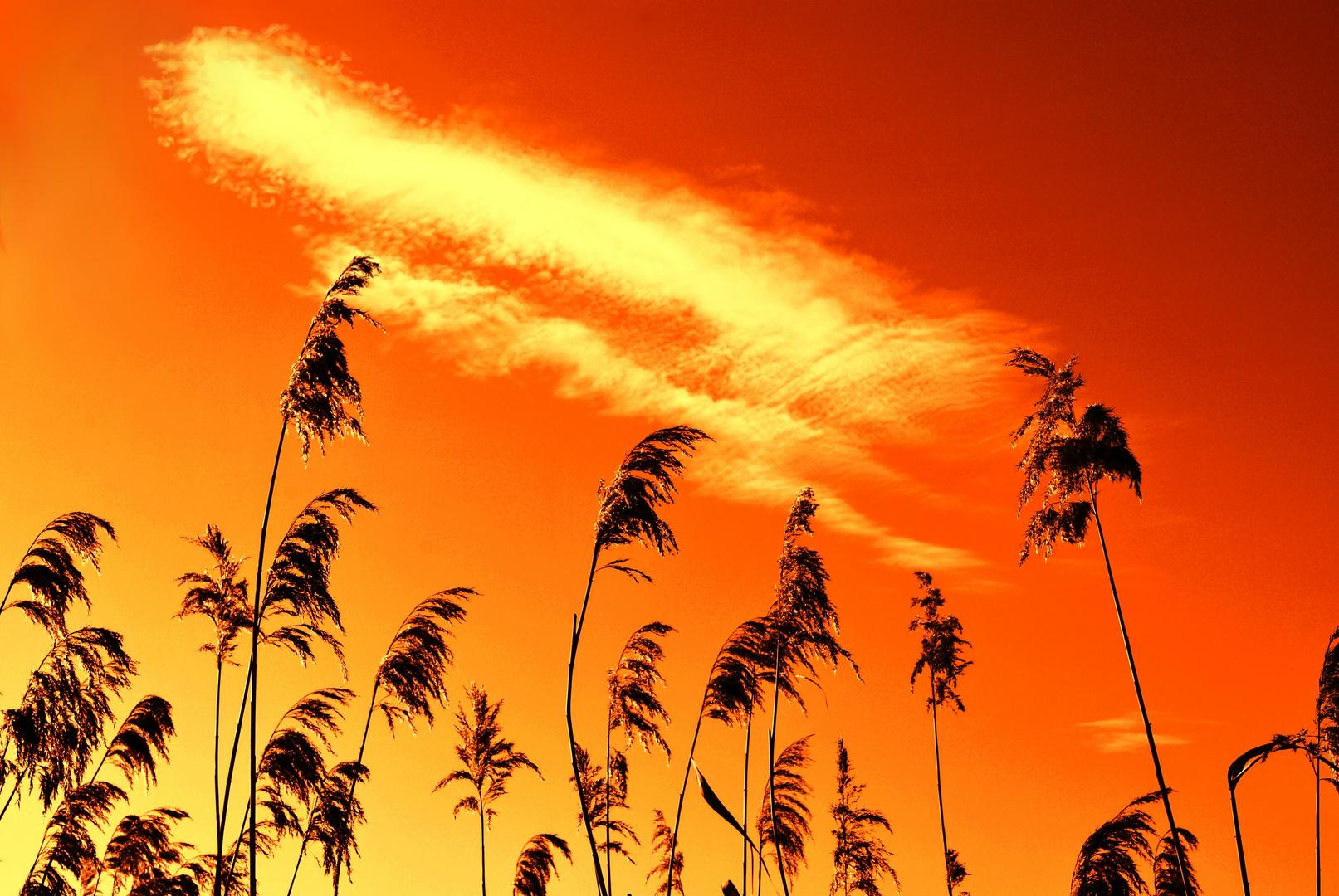 grass & sky 2nd edit