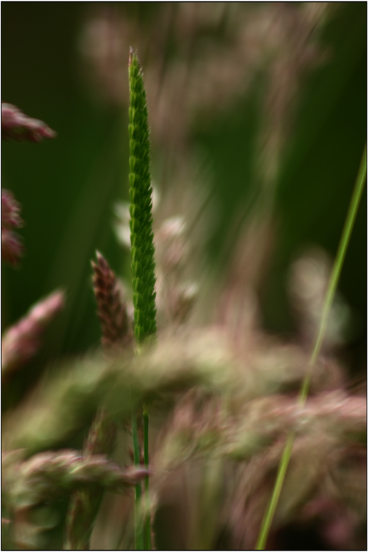 grass XI