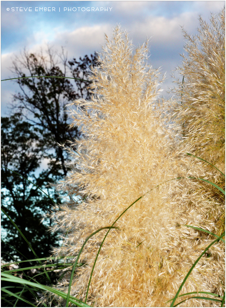 Grasses against a Frontal Passage Sky - An Autumn Impression