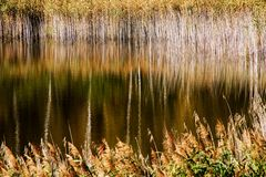 Grasses - Gräser