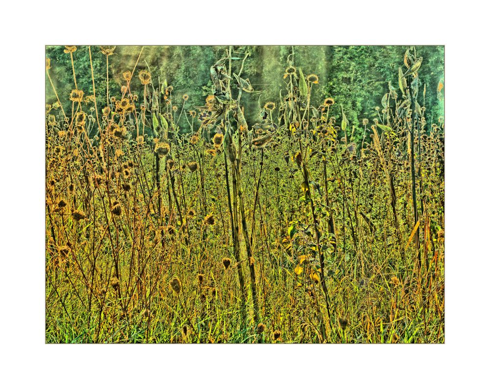 grasses in the meadow