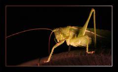 Grasshoper_2