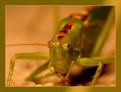 Grasshoper_3