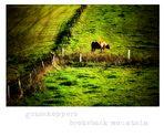 ~ grasshoppers brokeback mountain -- Bild mit [Cow] ohne [boy] ~