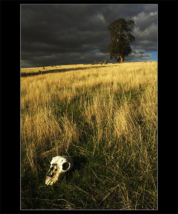 ~ Grasslands of death ~