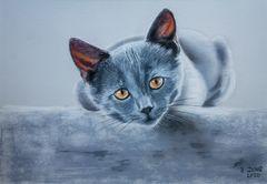 Graue Katze...