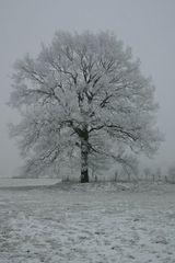 Grauer Wintertag 1