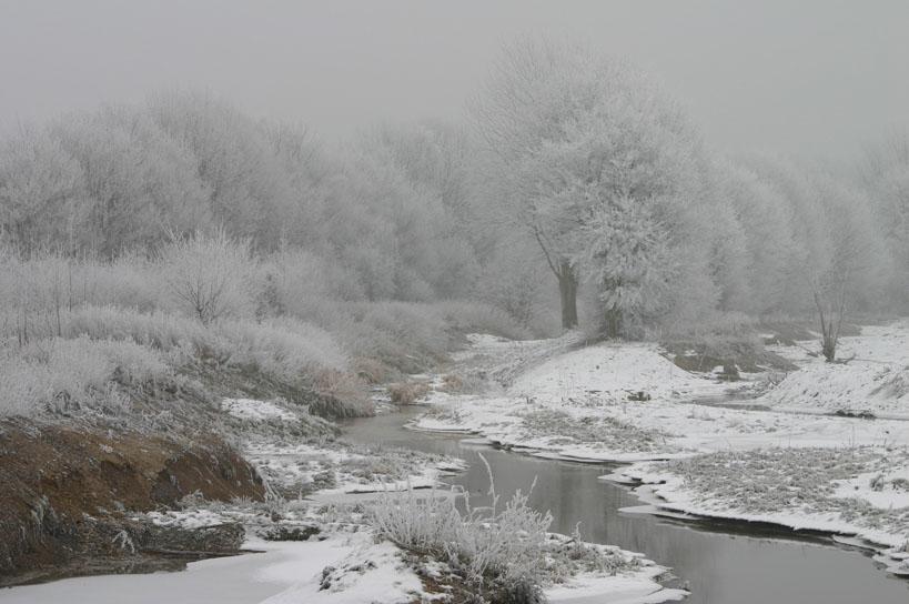 Grauer Wintertag 2
