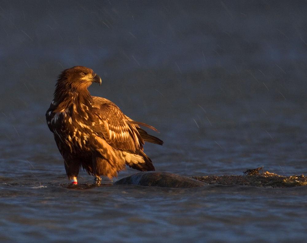 Graupelschauer am See