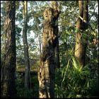 Great Tree (11)
