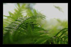 Green Days III