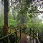 Green Forest of Thailand