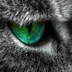 ... Green Hope ...