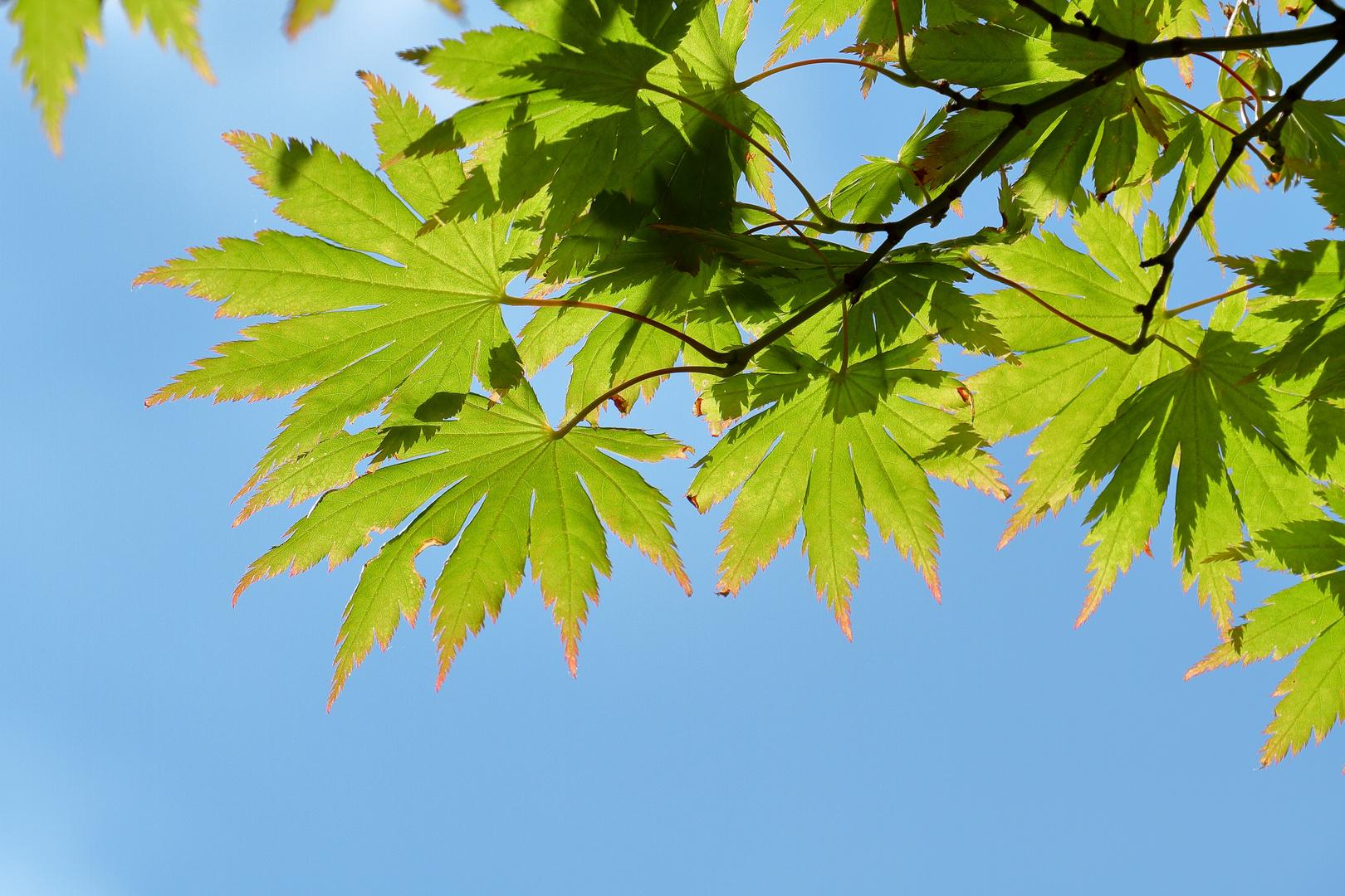 Green Leaf I