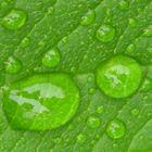 Green Leaf In A Rainy Day...;)
