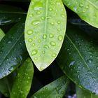 - Green leaves -