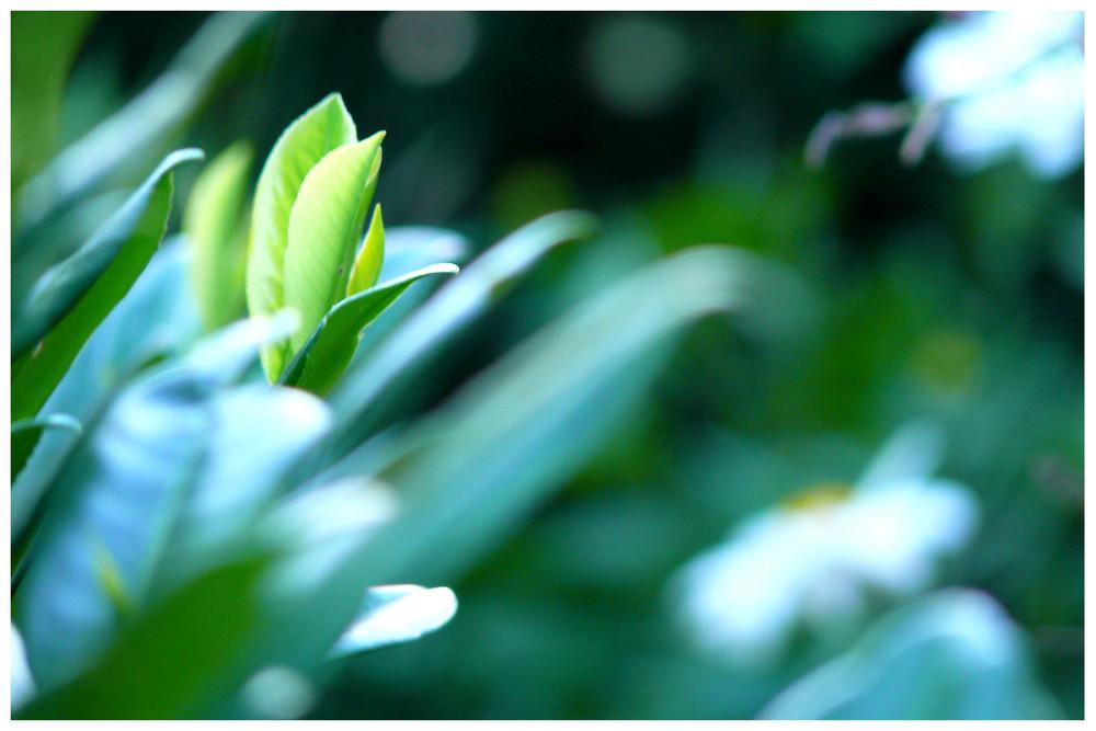 *green leaves*