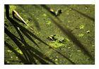 Green life 2....