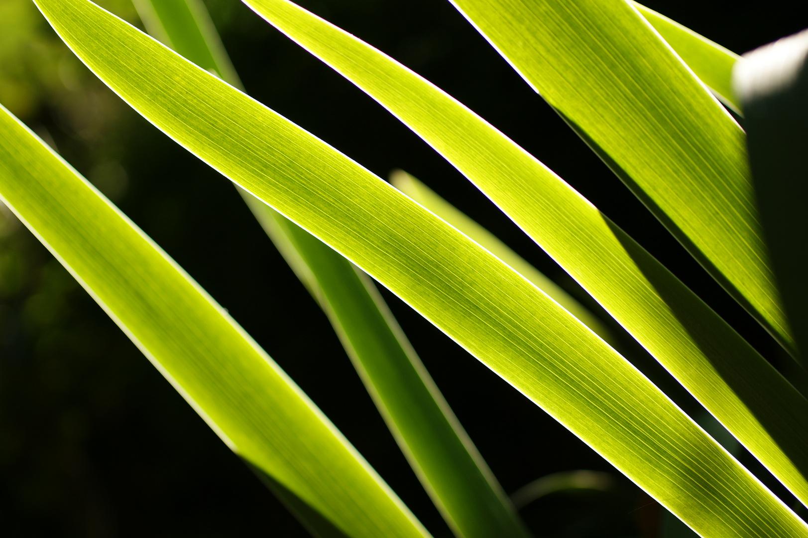 Green Mystery