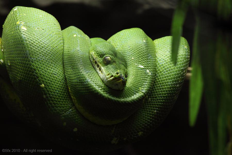 ...Green Snake...