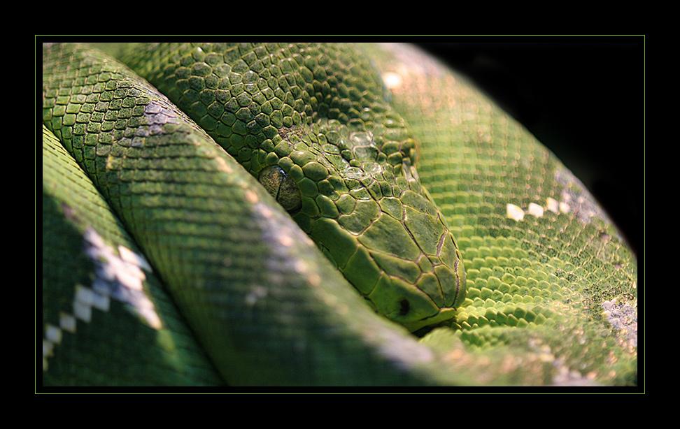 _green snake__